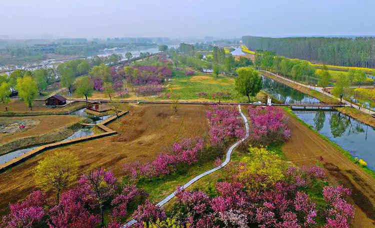 微山县第七届放鱼节暨首届湿地樱花节摄影创作团招募(图1)